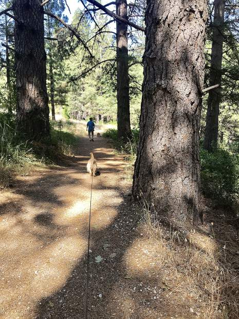 Dogs love Litton Trail in Grass Valley.
