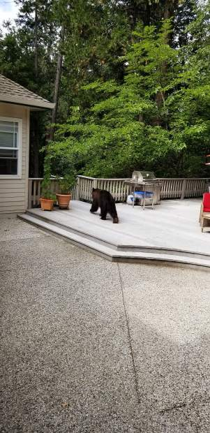 A visitor on our deck off Willow Valley Road.