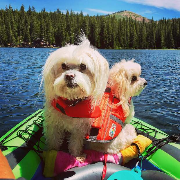 Summertime fun at Fuller Lake kayaking with Bernie and Lily!