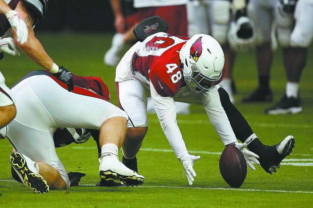 Arizona Cardinals linebacker Tanner Vallejo scoops up a fumble during NFL football training camp Wednesday, July 31, 2019, in Glendale, Ariz. (AP Photo/Ross D. Franklin)