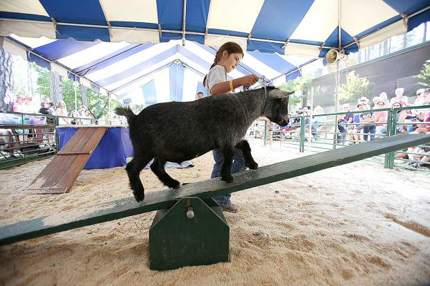 Clear Creek 4-H's Tessa Strong, leads her goat Twitch through the goat obstacle course Thursday.