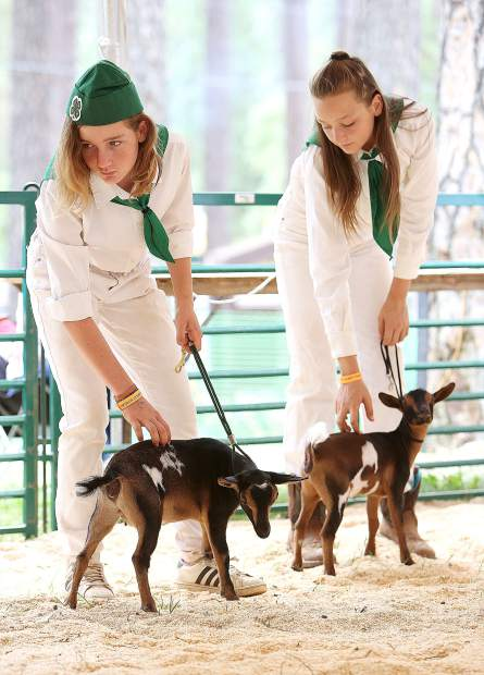 Savannah Musser, 12, and sister Allie Musser, 14, await for their Nigerian Dwarf dairy goats to be judged Friday from the goat show ring at the Nevada County Fair.