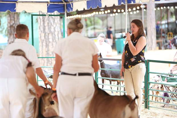 The dairy goat show judge comments about each goat being judged and gives reasons why each was placed above the next.