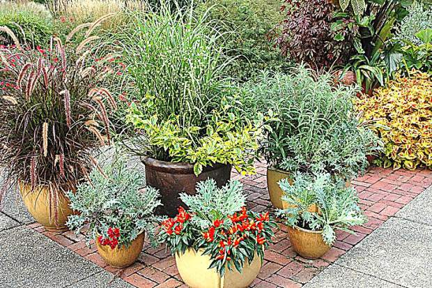 Spruce up an existing container by replacing weather worn annuals with fresh fall favorites. Pansies, sweet alyssum and dianthus are just a few annuals that hit their stride as cooler weather returns.