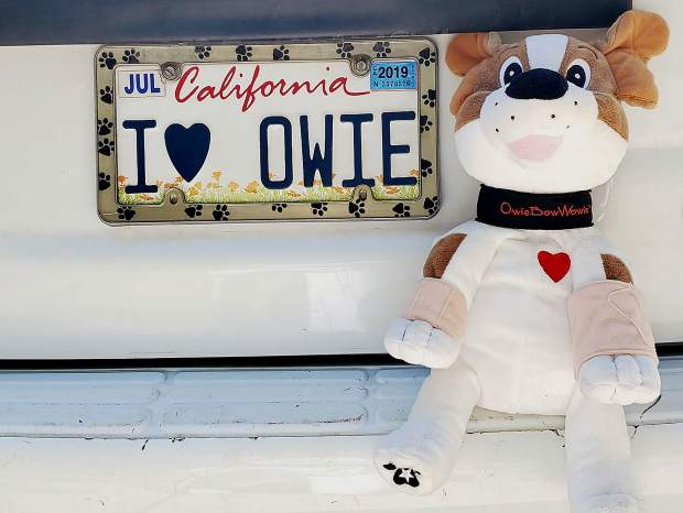 "Gina Meyer, who runs a nonprofit that gives stuffed animals named Owie Bowie to hospitalized children, sports the plate ""I LOVE OWIE"" on her car."