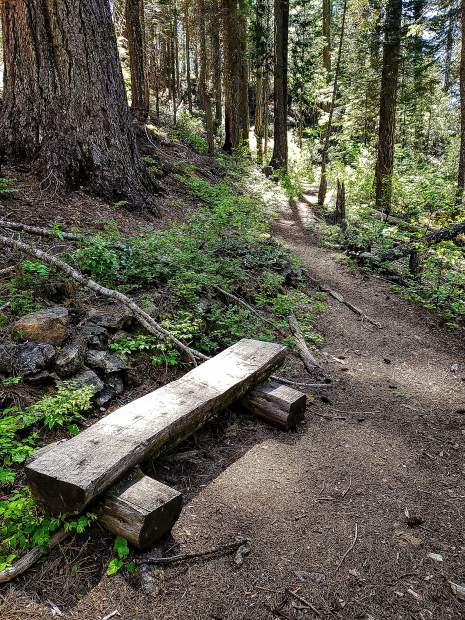 The picnic and day use area have two trails.The inner trail is only 0.4 miles long. The Forest View Trail is 0.9 miles in length.