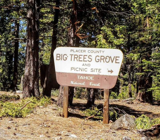 To get there: Take interstate 80 East to the Foresthill exit. Take Foresthill road to Mosquito Ridge Road, turn right. Take Mosquito Ridge Road 25-miles East of Forest Hill to the entrance to the Placer Big Trees picnic area on your right.