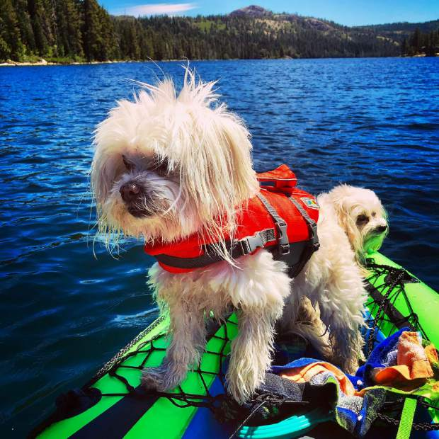 Bernie and Lily having summertime fun at Lake Valley Reservoir at Emigrant Gap.