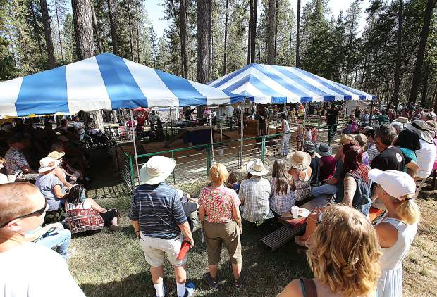 Folks gather around the goat judging tent to witness the goat obstacle course.