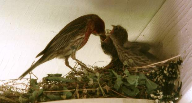 This wren family setup their nest right outside our kitchen door... Fun