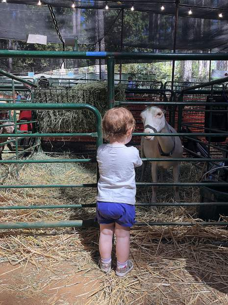 Rose Nixon, 2, making friends with one of the goats in the barn. They seemed to have a connection, that's for sure!