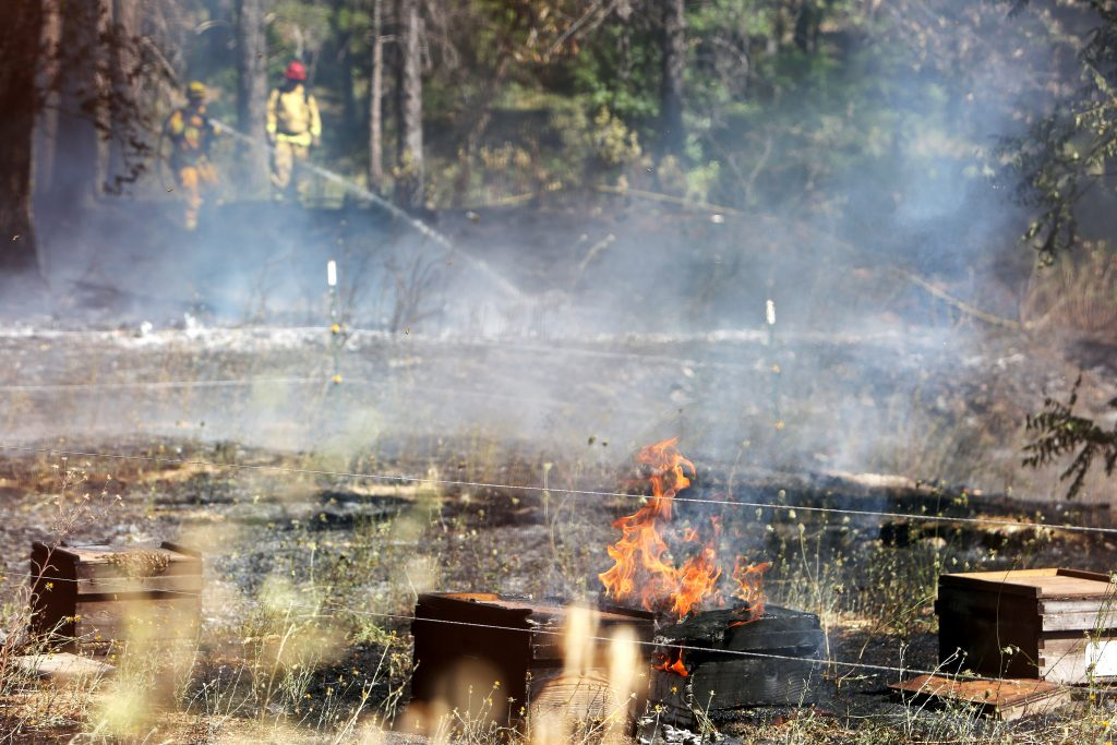 Firefighters extinguished a 1/4 acre vegetation fire off of Idaho Maryland near Brunswick Road that posed additional hazards for firefighters when bee boxes full of bees caught fire.-Elias Funez/efunez@theunion.com