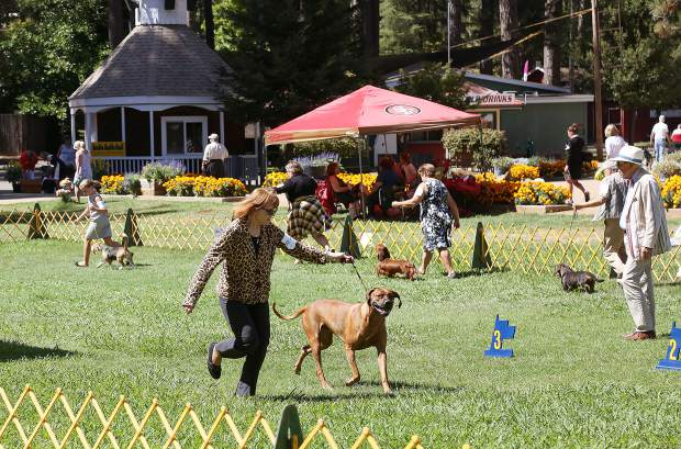 Over 150 dog breeds were brought to the Nevada County Fairgrounds where the Gold Country Kennel Club held their annual dog show competition.