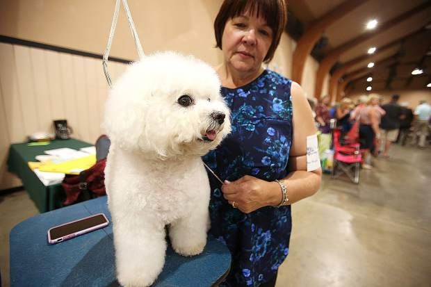 A Bichon Frise named Macy, and her owner Roz Allen of Meadow Vista, showed well during this year's Gold Country Kennel Club Dog Show. The Grand Champion dog won best of breed and competed in the owner handler series.