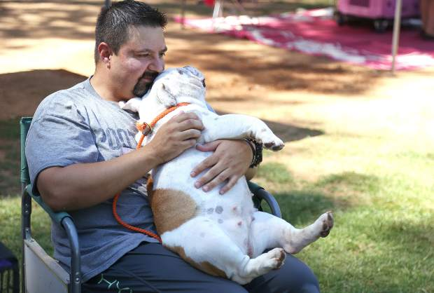 Rick Villarreal and his bulldog Pumpkin sit back and watch all the canine action during the Gold Country Kennel Club Dog Show where over 150 breeds of dogs and their owners competed.