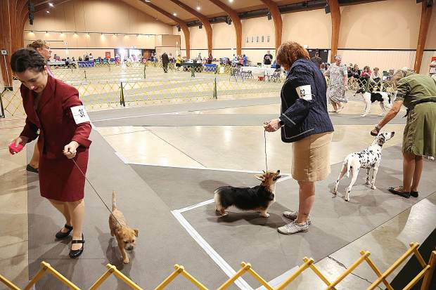 Dog owners bring their puppies into the ring for the best of puppy show.