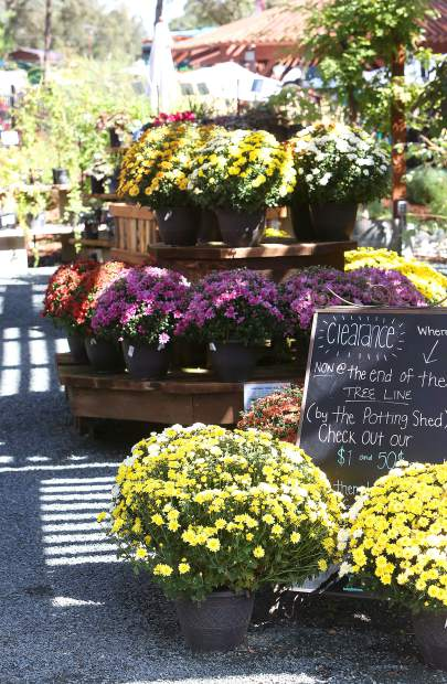 The outdoor patio of Wildflower Nursery in Penn Valley is filled with natural color and foliage specifically chosen for the climate.