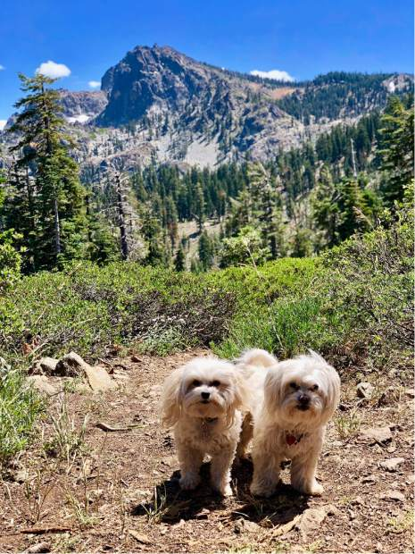 Bernie and Lily enjoying a day at the Sierra Buttes, Lakes Basin!