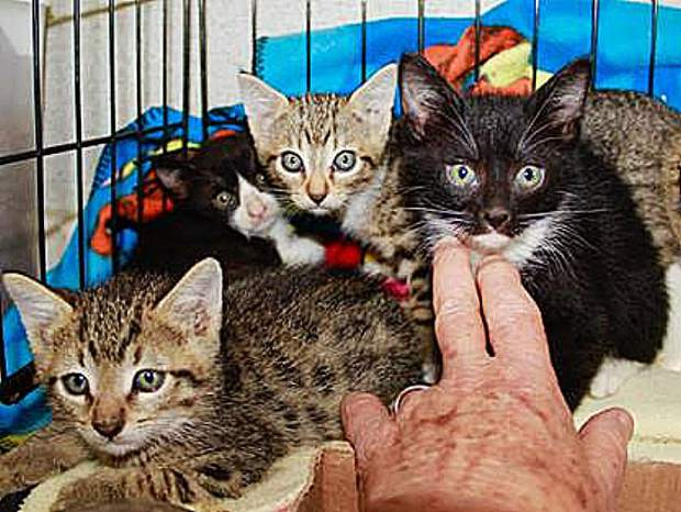 Sammie's Friends reminds our community to spay and neuter!  More kittens come daily and are ready for adoption.