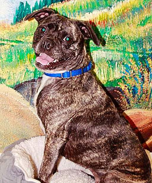 Sammie's Friend pup, Pugsy, looks like she jumped into the mural.