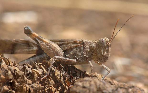 The last sunny days of summer are bringing out the hoppers.