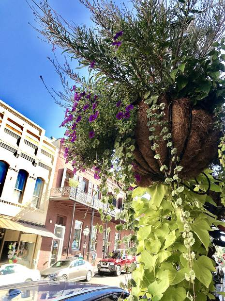 Hanging flower baskets downtown Nevada City.