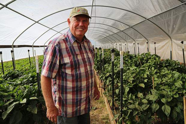 Rich Johansen of Johansen Ranch in Penn Valley. Proceeds from Sierra Harvest's film fundraiser, set for this Friday, will help provide scholarships for farmers participating in the Farm Institute in 2020.