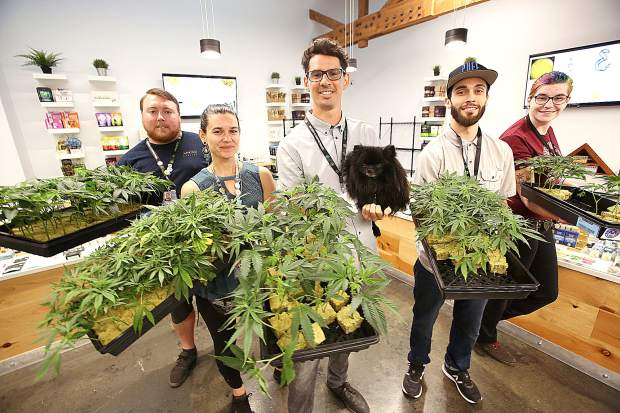 Elevation 2477 staff including Jared Williams, from left, Govinda McComb, owner Daniel Batchelor, Nick Martini, and Kaleigh Kirkpatrick hold trays of Double Dream cannabis clones currently for sale at Nevada County's only dispensary. The dispensary has been providing clones as well as cannabis education and now offers online ordering and delivery.