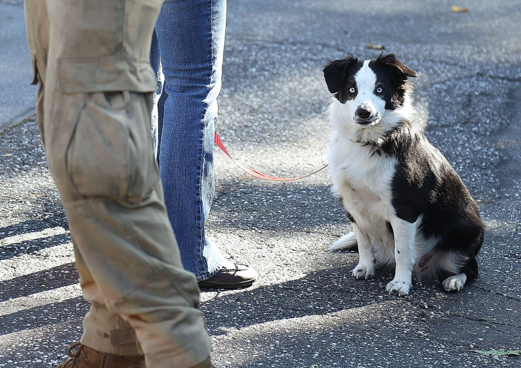 Crystal Ashworth's dog, Panda, was in attendance at the search party forming to look for the woman who has been missing since Sunday night.