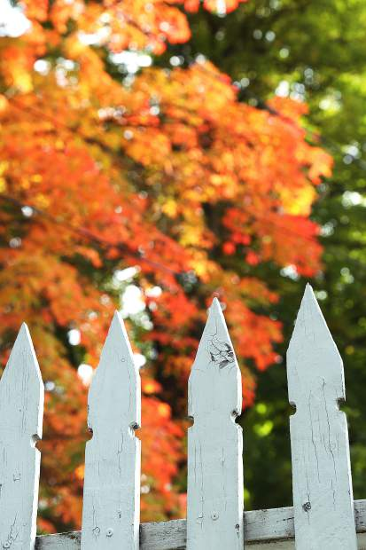 Orange leaves and white picket fence posts contrast each other in Nevada City.