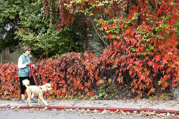 Pat Forman walks her dog Zephy along Broad Street as it is adorned in it's fall foliage Tuesday afternoon.