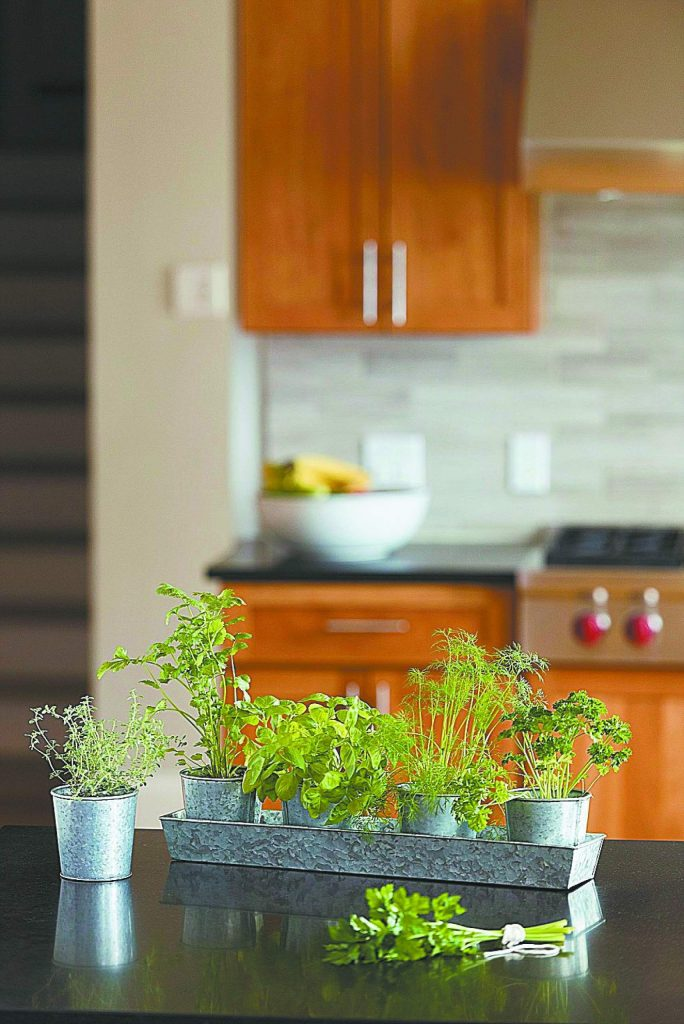 Indoor herb kits keep gardeners growing all year, while providing fresh herbs for flavoring and garnishing meals. Photo credit: Photo courtesy of Gardener's Supply Company