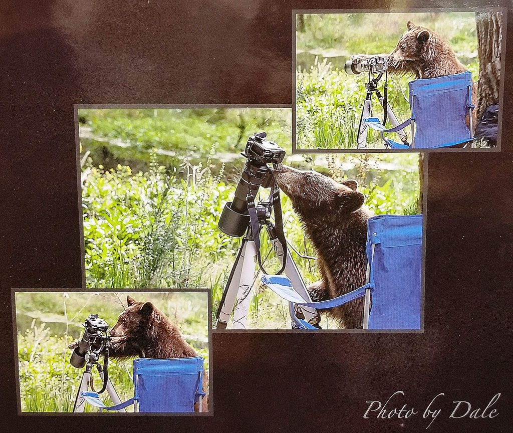 A curious bear is on the wrong side of this camera that was set up to photograph him.