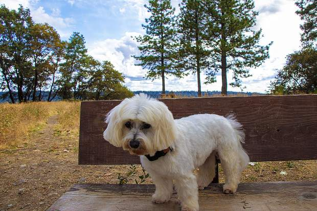 Beautiful Sunday afternoon in-between storms at the top of Sugarloaf Mountain - walking Oliver...can see some trees starting to turn yellow in Nevada City.
