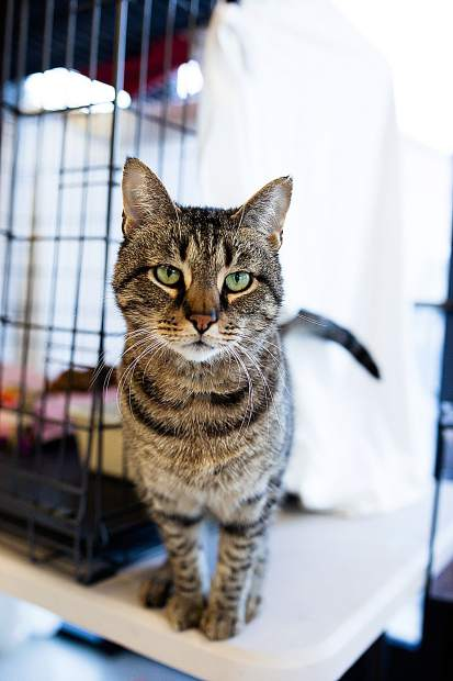 Grover is a multiple year resident at AnimalSave, often overlooked because of his asthma, which makes him cough occasionally.