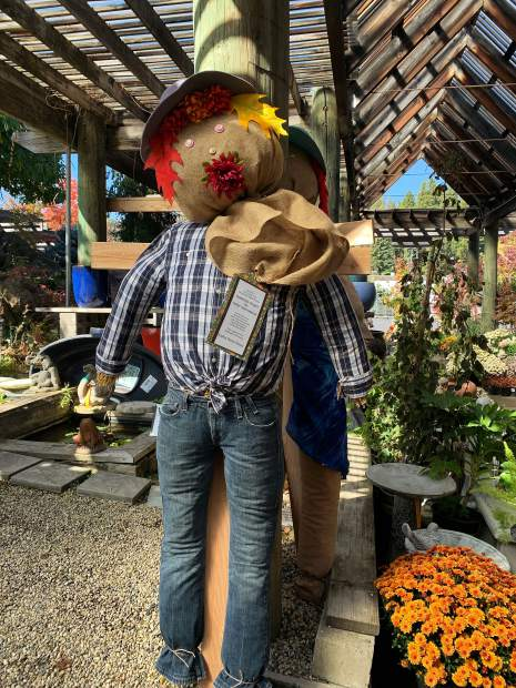 The students in Ms. Bair's 5th grade class at Seven Hills Middle School put these scarecrows together as a fundraiser for Heifer International. They can be found and bought at Weiss Brothers Nursery in Grass Valley.