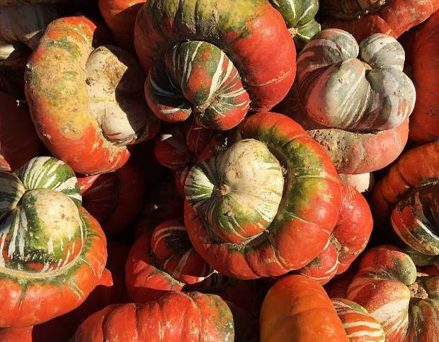 Fall Gourds.