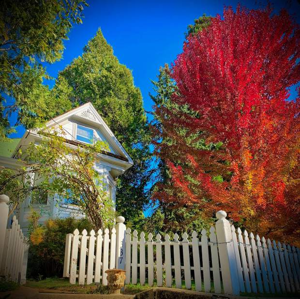 Driving around Nevada city on Saturday, October 12 I saw such beautiful fall colors everywhere…