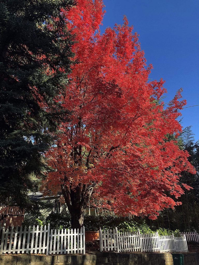 Beautiful fall colors downtown Nevada City, on Pine Street.