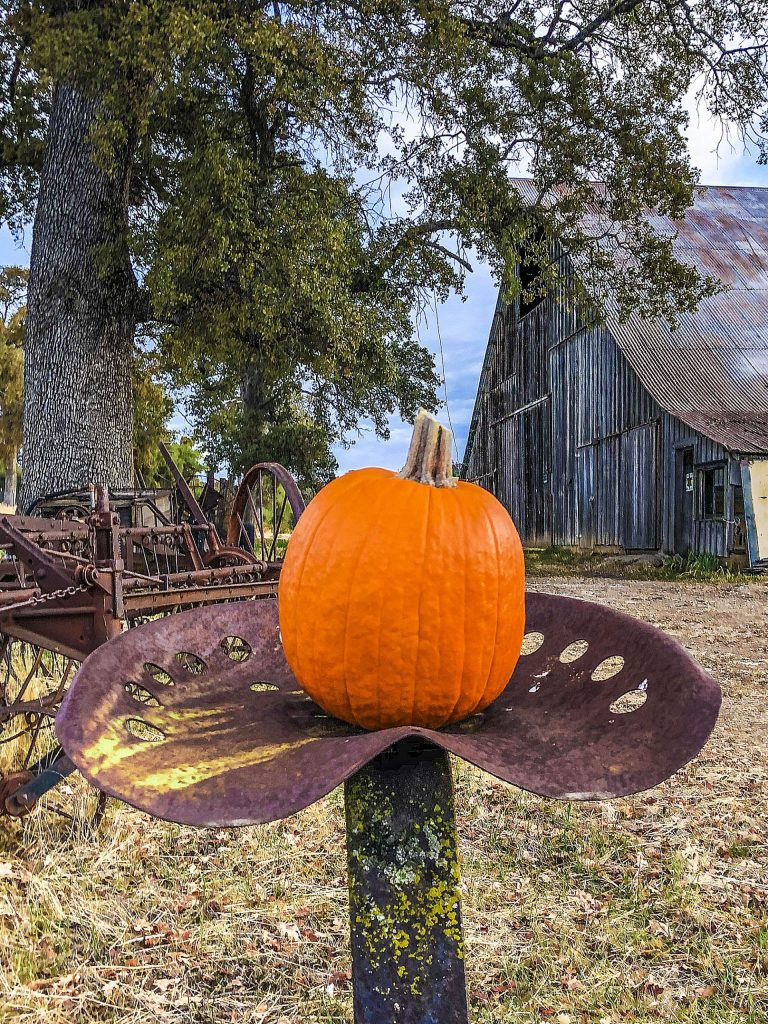 It's pumpkin time at the old barn off McCourtney Road in Grass Valley.