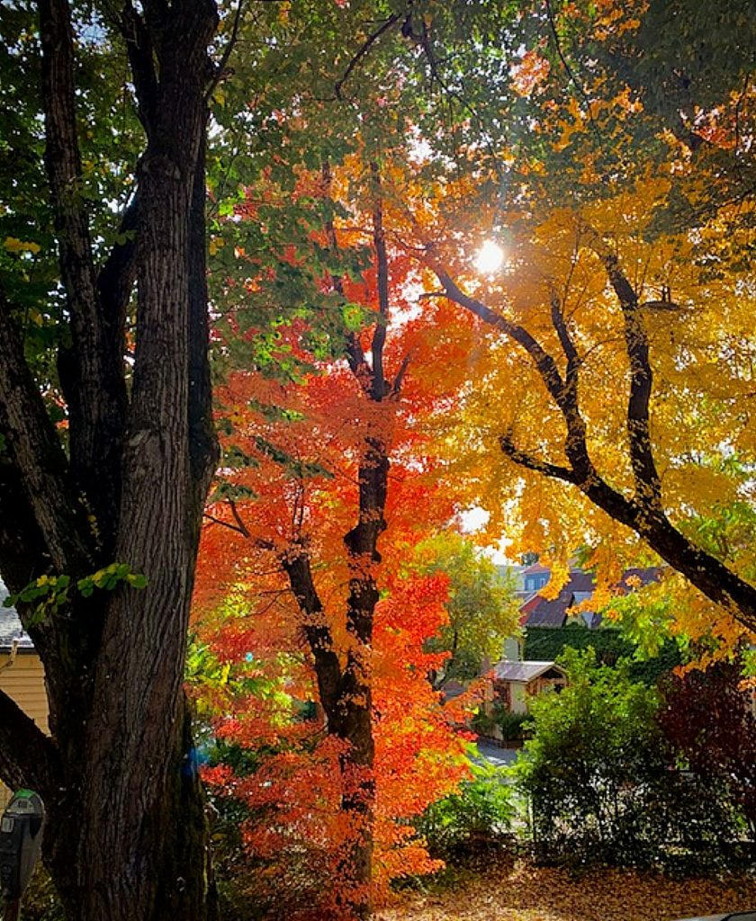 Fall tree foliage in downtown Nevada city on October 24.