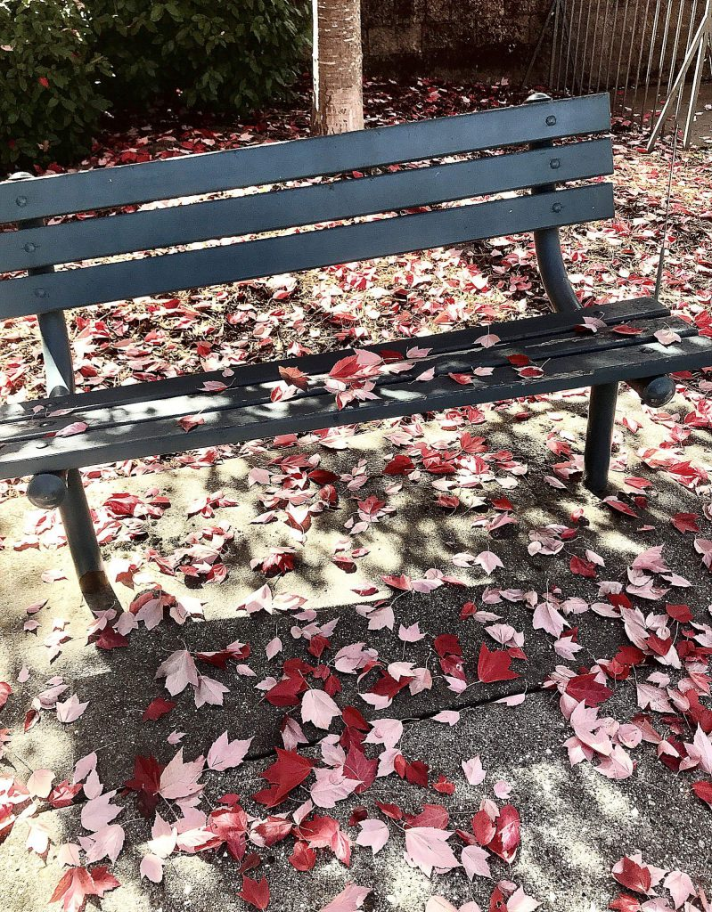 The leaves are falling in Nevada City!