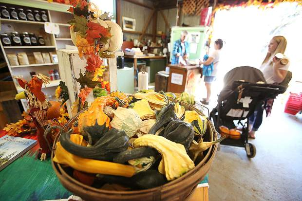 People stock up on fresh preserves, cider and squash at Bierwagen's Donner Trail Fruit and Pumpkin Patch on Tuesday. The farm is open Tuesday through Sunday from 10 a.m. to 5 p.m. at 7473 Lower Colfax Road in Chicago Park.