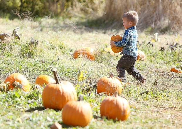 A young Josiah White picks up a pumpkin that he can carry Tuesday at Bierwagen's.