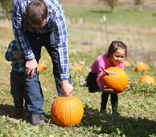 Maddison and her father Jesse White work on selecting their pumpkins Tuesday at Bierwagen's Donner Trail Fruit and Pumpkin Patch off Highway 174.