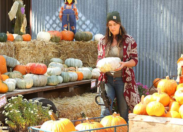 Camptonville's Deja Solis picks a gourd from the specialty pumpkins for sale at Bierwagen's.