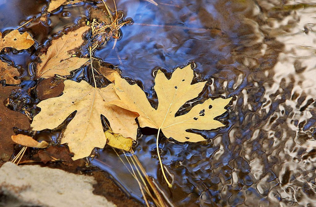 Autumn leaves float on the surface of Little Wolf Creek through portions of the nature trail accessible from the Wolf Creek Trail, which celebrated its official grand opening Saturday morning.