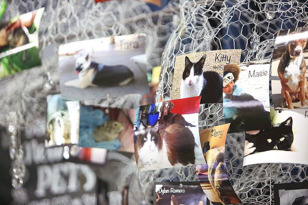 The Nevada County Pets in Need Altar is dedicated to the pets that have crossed the Rainbow Bridge and contains pictures and memories of peoples' pets that have died.