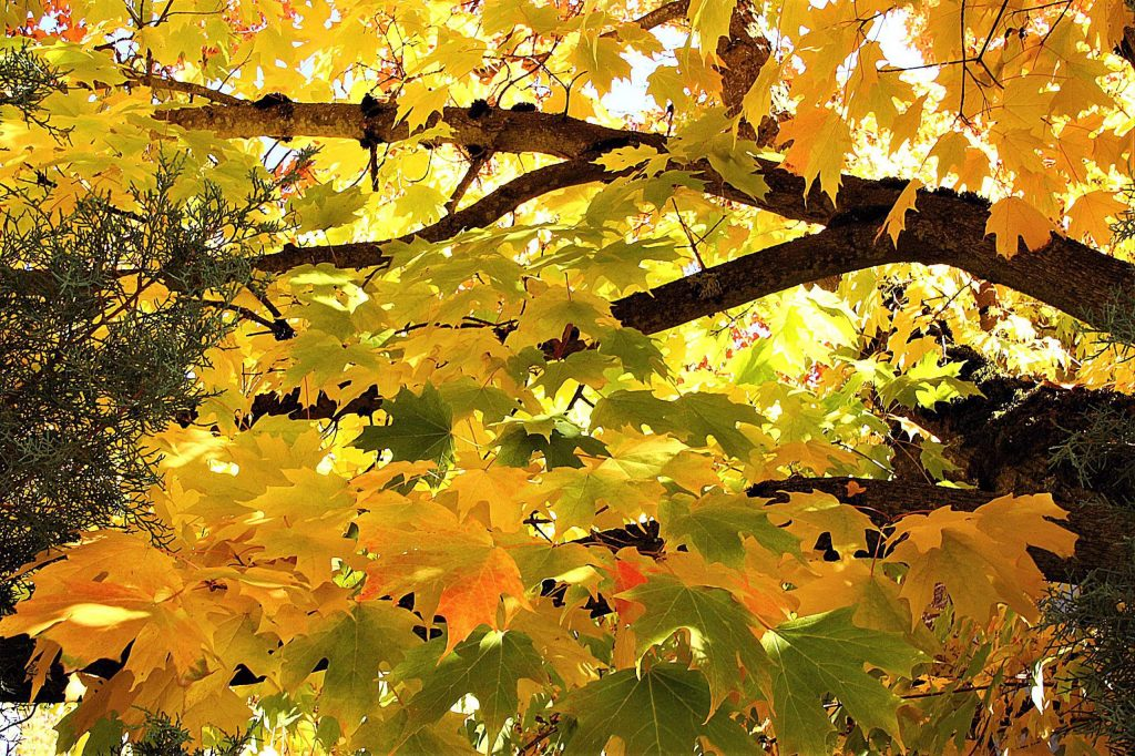 It's a beautiful Autumn! Taken near the post office in Nevada City by Ruth Hottel.