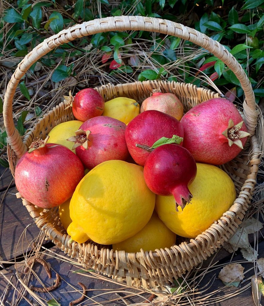 Harvest of local Rough and Ready pomegranates and Meyers lemons.